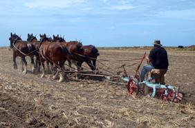 Ploughing using Hay-burners